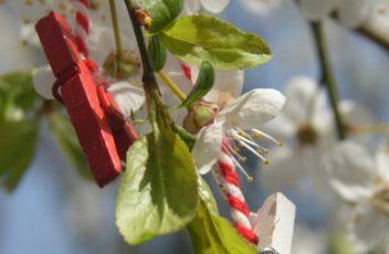 spring-1125